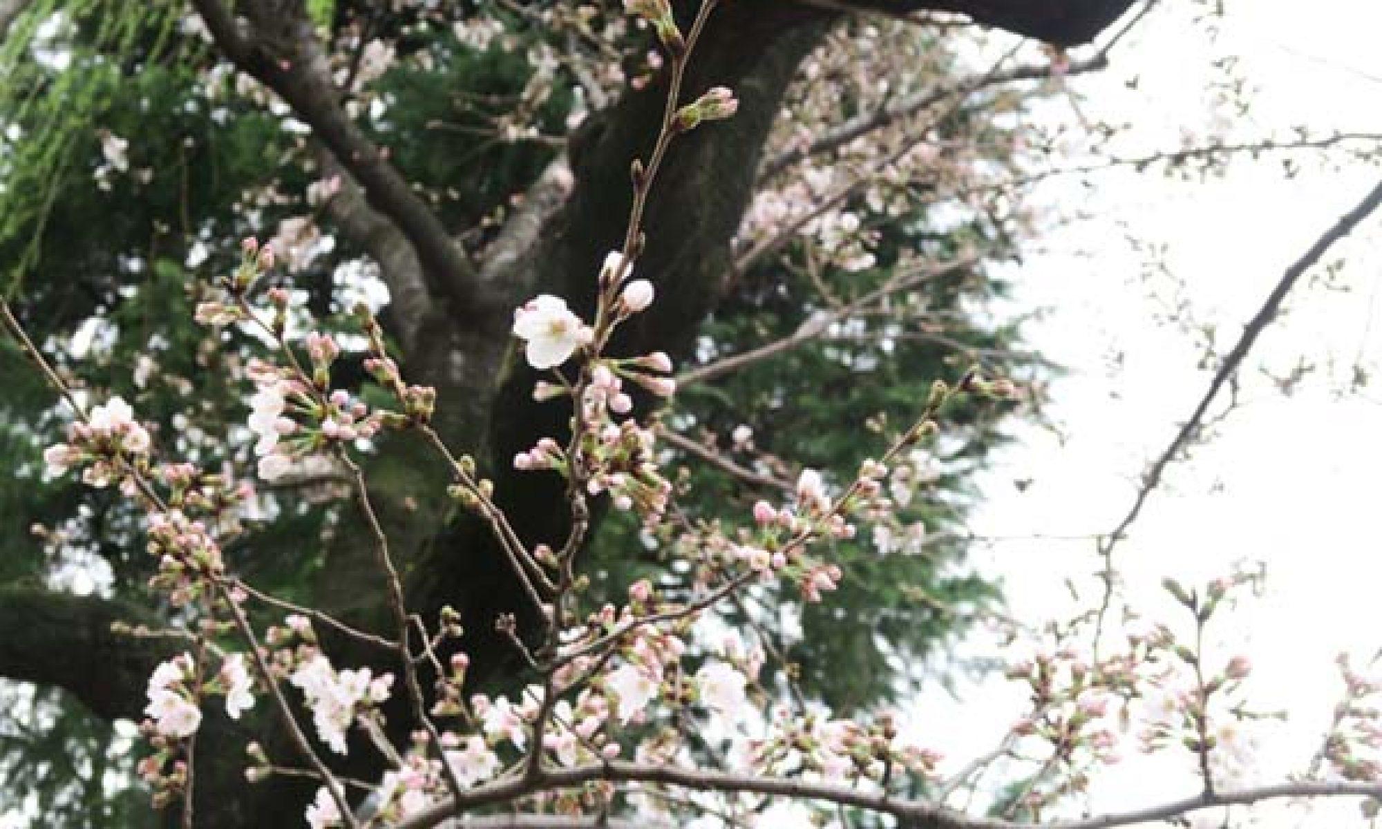 市立札幌平岸高等学校全日制同窓会【平高会】